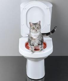 katt toatraning